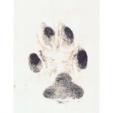Hand / Foot / Paw Print Kit